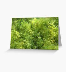 Underwater Vegetation 515 Greeting Card