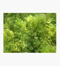 Underwater Vegetation 515 Photographic Print