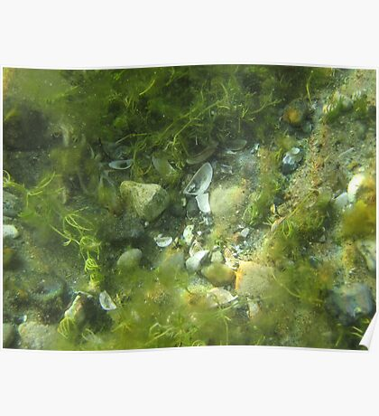 Underwater Vegetation 520 Poster