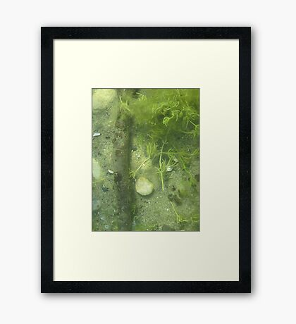 Seaweed Chicken Monster Framed Print