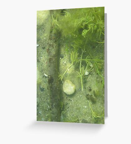 Seaweed Chicken Monster Greeting Card