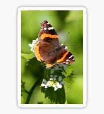 Red Admiral Butterfly Portrait Sticker