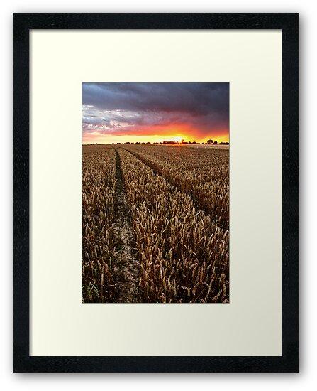 Sunset Through The Rain, Essex by Mat Robinson