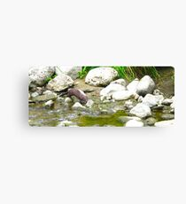 Sly Otter Canvas Print