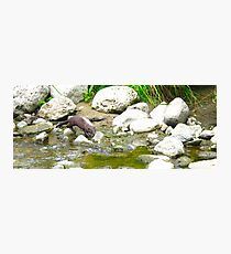 Sly Otter Photographic Print