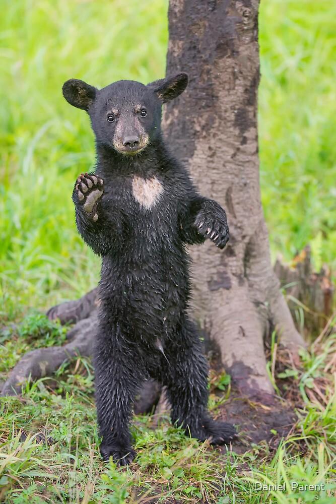 Hello Bear by Daniel  Parent