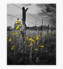 Color In The Field Photographic Print