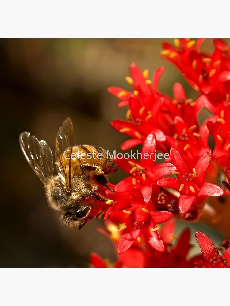 Biene auf scharlachroten Malerpinsel von celestem