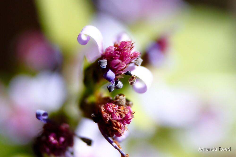 Purple Petal Curl Closeup by amanda reed