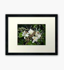 Blossoms Of A Jungle Tree - Flores De Un Arbol De La Selva Framed Print