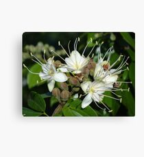 Blossoms Of A Jungle Tree - Flores De Un Arbol De La Selva Canvas Print