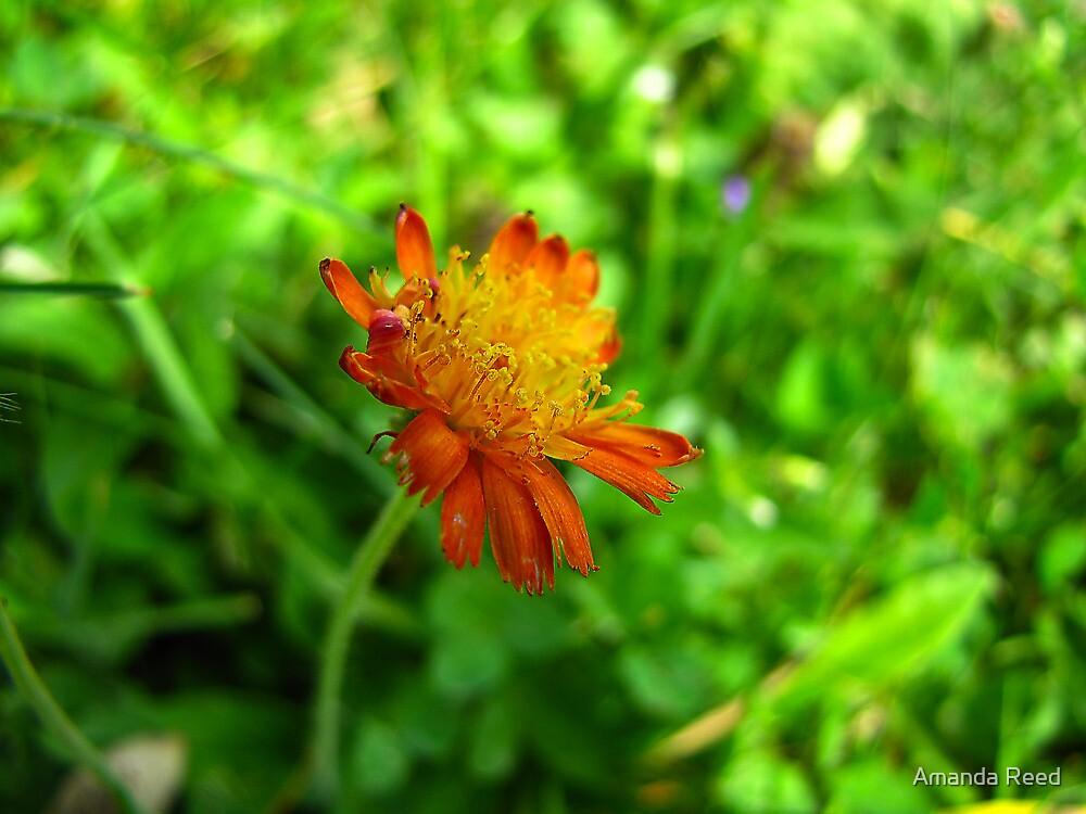 Loney little flower by amanda reed