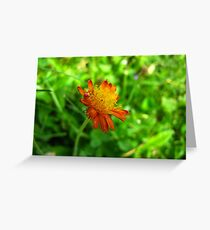 Loney little flower Greeting Card