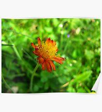 Loney little flower Poster