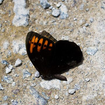 Butterfly  by marco2386