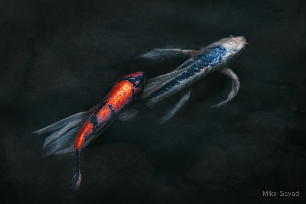 Animal - Fish - Beauty and Grace  by Mike  Savad