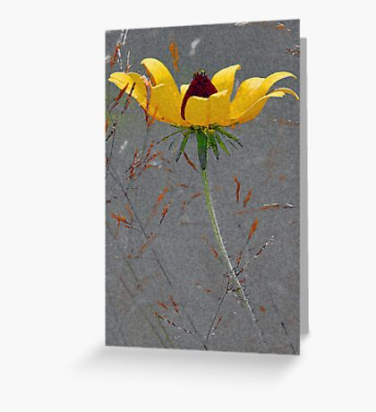 Black-Eyed-Susan -- Meadow Grass Greeting Card