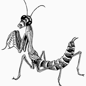 MC Escher Mantis by Biomechanoid56