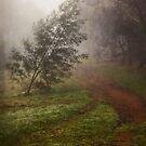 Fog at the Pinnacle by Wolf Sverak