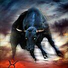 Taurus by carol brandt