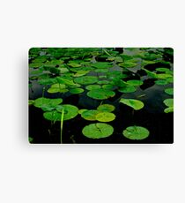 Lily Pads on Dark Water-Photograph Canvas Print