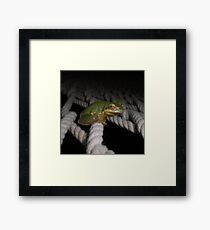 Frog Siesta - Just Hanging Out Framed Print