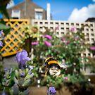 A Beautiful Bee-hind! by John Hooton