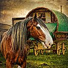 The Gypsy Vanner by Brian Tarr