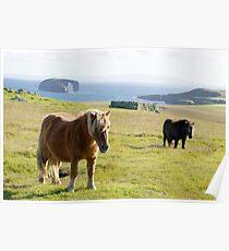 Dor Holm, Shetlands Poster