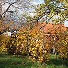 The Last Few Days of Autumn in Our Garden in Romania by Dennis Melling