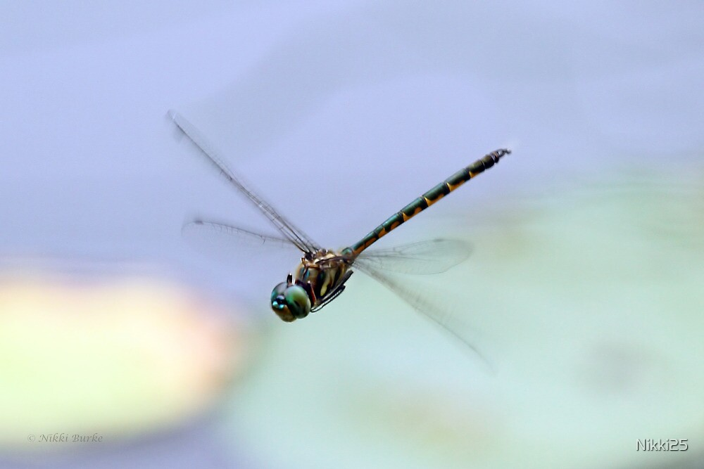 Dragonfly  by Nikki25