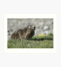 Boss of the marmots Art Print