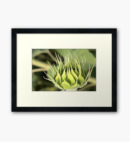 green sun Framed Print