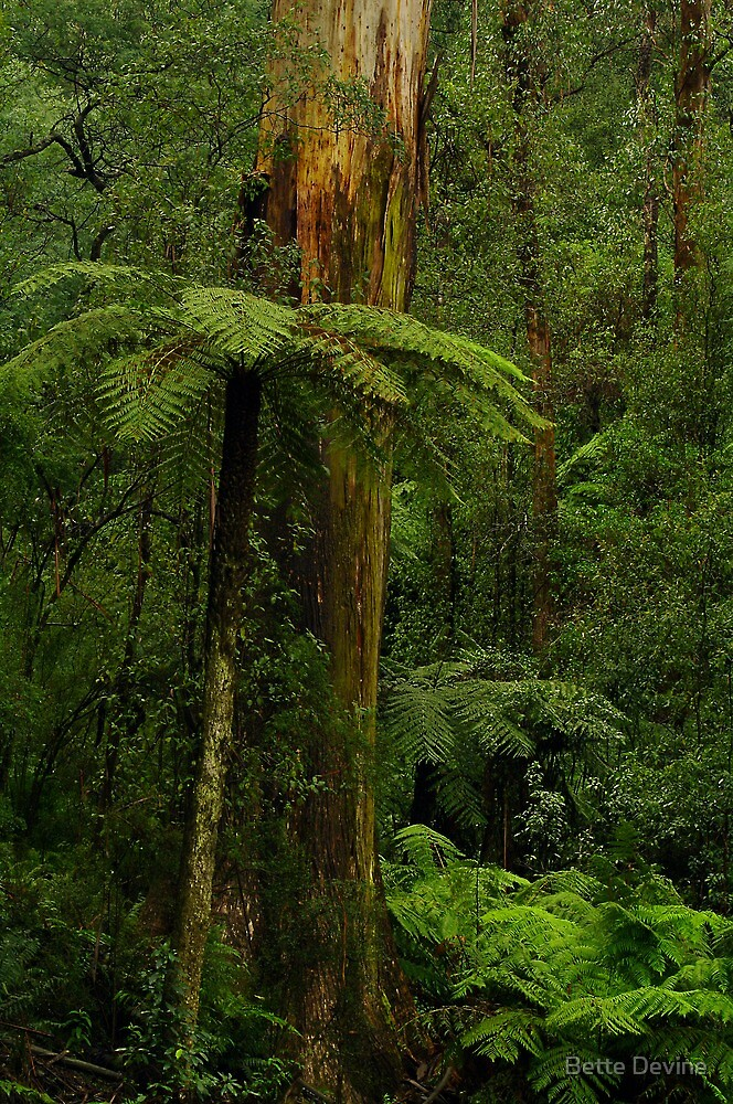 Rain Forest by Bette Devine