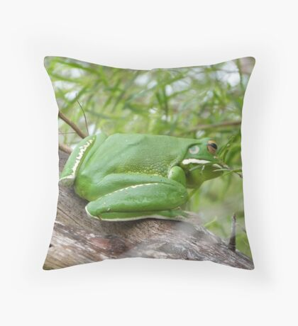 a very large white lipped green tree frog Throw Pillow