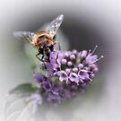 Striped buzz......... II by Bob Daalder