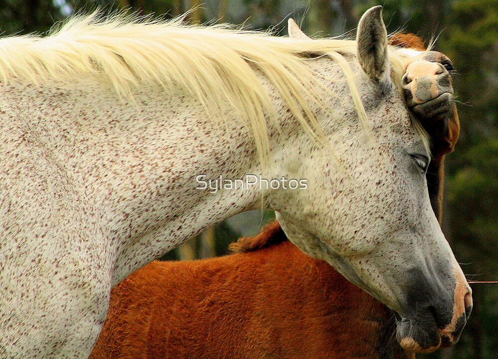 Horsey Cuddles by SylanPhotos