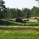 Pioneer Cabin by Scott Hendricks
