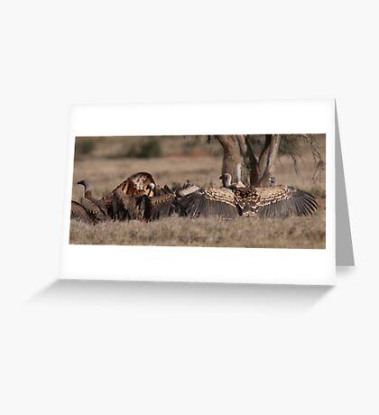 Vulture display Greeting Card