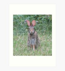 Brer Rabbit Art Print