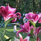Fujian and Dalian Lilies by Pat Yager