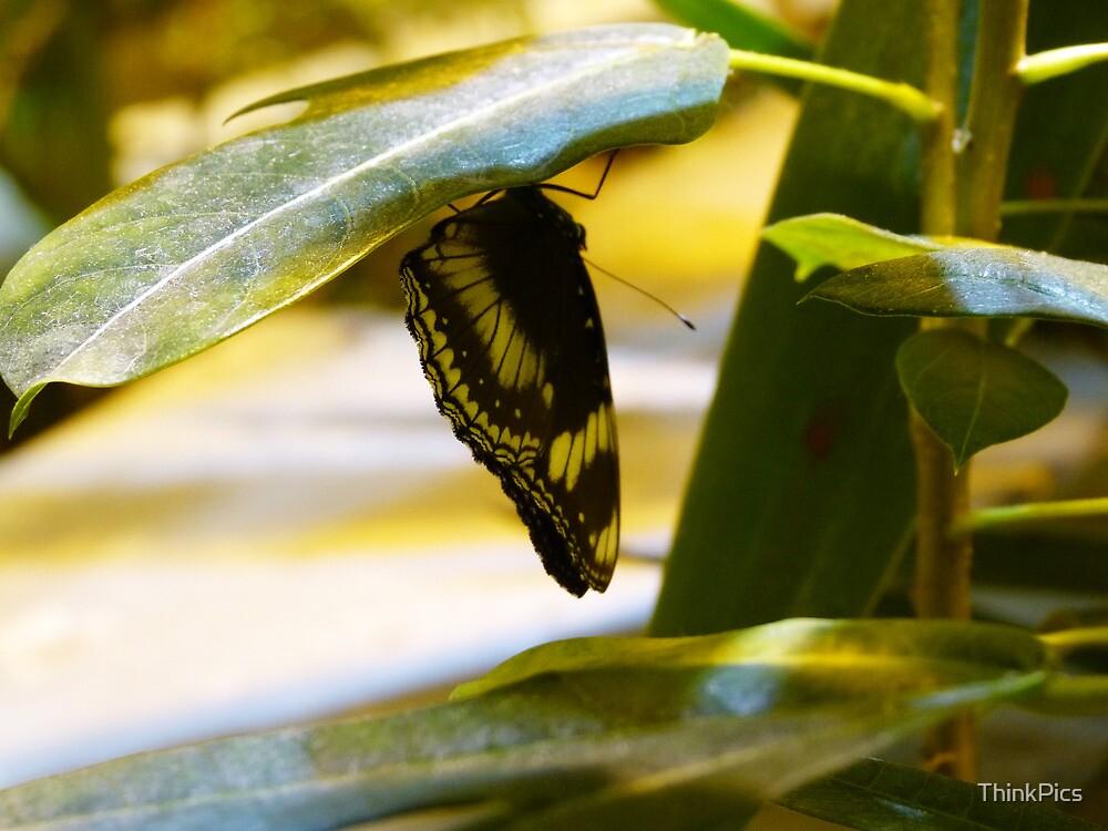 Butterflies II by ThinkPics