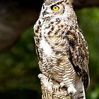 Great Horned Owl by Ellesscee
