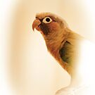 Maximus the Conure by Kathy Nairn