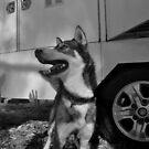 the dog trailer by Matt Mawson