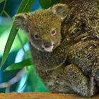 To Cute by fnqphotography