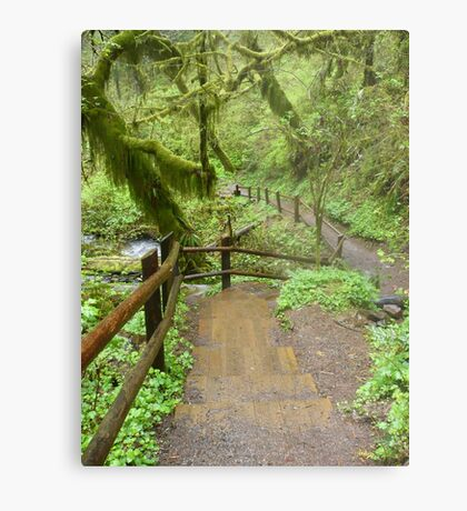 Go Where The Path Leads Metal Print