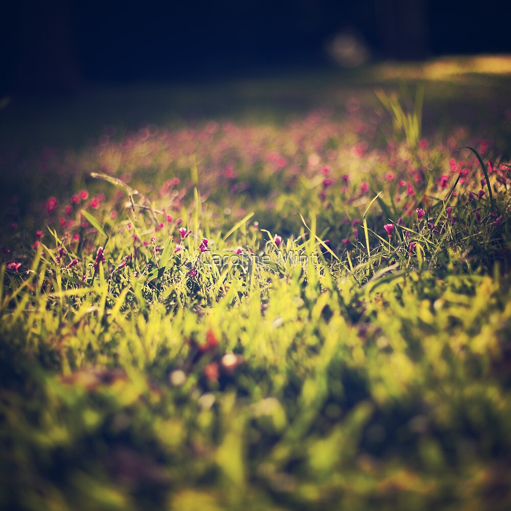 Little violet flowers on the meadow (Vintage and Retro nature Photography) by Caroline Mint