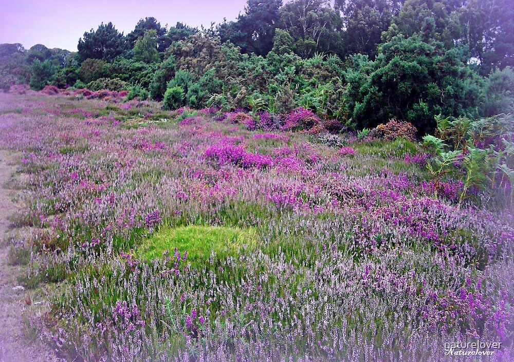 Heathland-Arne Dorset by naturelover