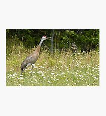 Sand Hill Talking Back Photographic Print